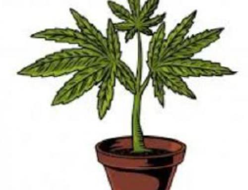 #compartomisrecursos. Mitos sobre el cannabis